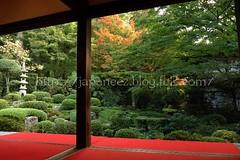 151112 (finalistJPN) Tags: kyoto autumn fall colors japanesegarden sanzenintemple ohara autumnleaves evening zenspirit discoverjapan japanguide traveljapan nationalgeographic discoverychannel stockphotos availablenow