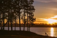 Sunny Autumn Evening | Kaunas Sea #330/365 (A. Aleksandraviius) Tags: sunny autumn evening kaunas sea lithuania people wind sunset lietuva nikon nikkor 85mm 85 365 3652016 d810 nikond810 85mmf14g nikkor85mm nikon85mm14g f14g nikon85mm project365 330365