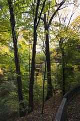 DSC07420 (sesquiotic) Tags: foliage fallfoliage ontariosciencecentre