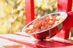 Autumn Harvest (lewist584) Tags: sonynex5r cosinon50mmf17 cosina sony nex emount m42mount manualfocus adaptor lewist584 luxembourg lieler ardennes eisleck rasberry goldenraspberry fruit berry garden autumn harvest bench gimp gmic polaroid690