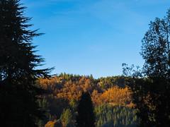 Gwydir Forest (sgl0jd) Tags: wales cymru snowdonia snowdonianationalpark betwsycoed capelcurig llugwy llynelsi ogwen sheeppen bouldering climbing sunset goldenhour reflection moelsiabod ygarn foelgoch forest coed coedgwydyr gwydirforest