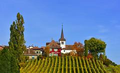 Ambiance d'automne (Diegojack) Tags: paysages vaud lacte vignes vigno automne village fchy monument glise