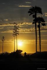 Waiting.... (Joe Hengel) Tags: lagunabeach pacificocean palmtrees palmtree palm california clouds ca cloudsorangecounty sky goldenstate goldenhour golden glow socal southerncalifornia sunset sea seaside seascape seashore theoc tree trees orangecounty oc outdoor ocean