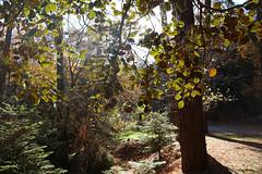 Troodos Geopark (48) (Polis Poliviou) Tags: polispoliviou polis poliviou   cyprus cyprustheallyearroundisland cyprusinyourheart yearroundisland zypern republicofcyprus  cipro  chypre   chipir chipre  kipras ciprus cypr  cypern kypr  sayprus kypros polispoliviou2016 troodosgeopark troodos mediterranean nicosia valley life nature forest historical park trekking hiking winter walking pine pines prodromos limassol paphos fall autumn geopark kakopetria