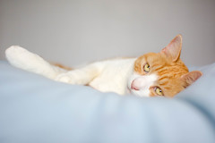 Herbie [Explored] (cuppyuppycake) Tags: cat ginger pet bed duvet lazy caturday saturday nikon d7200 sweet cute content happy