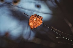 listen to the silent melody you are surrounded by every day... (***étoile filante***) Tags: blatt leaf light licht tree baum dof bokeh nature natur silence stille melody melodie calm ruhe calming poetic poetisch soulful emotions