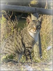 UNA DE GATOS 7 (BLAMANTI) Tags: gatos cat felinos mascotas animales animalesdecompañia