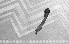 Patiently Waiting, Seattle, Washington (jfearer_photo) Tags: 500px seattle pacific northwest film 35mm ilford hp5 kodak d76 westlake tiles brick bw 400 shadow washington olympus om10