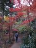 IMG_1028 (forestgreendog) Tags: 2016 autumn canonpowershots90 compactdigitalcamera digital treewoodforest 松戸