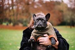 Ella and her human ([Londres]) Tags: frenchbulldog ella park gttingen 35mm film canona1 canon neighbordogs