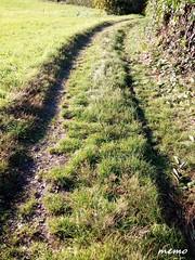 autunno in Brianza (memo52foto) Tags: autunno autumn automne brianza lombardia lombardy lombardie lombardei italia italy italie italien sunset herbst piante sentiero