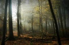 NoLightShinesBrighterThanTheLightOfForgiveness (BphotoR) Tags: dimamanuel light rays trees