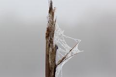 Morgentau (jueheu) Tags: morgentau tau netz spinne spider tropfen drops
