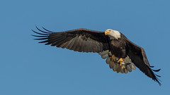 Winking ... (Ken Krach Photography) Tags: eagle