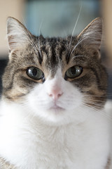 Shallow depht of field (Sunkmanitu tanka) Tags: cat animal angus shallow nikon nikkor d700