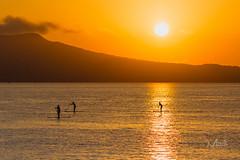 Morning Boarding (Mikey Mack) Tags: auckland newzealand nz