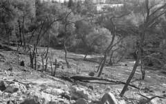 exakta_vx_kodak_triX_400_haifa_fire_26_nov_2016_015 (avitalnatanson) Tags: exakta fire damage kodak trix arson terror haifa carmel