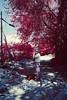 Kodak Ektachrome EIR (Kee Choon) Tags: ektachrome nikonf3 eir kodakeir nikonais28mmf2 kodakektachromeinfraredeir hoyaorangegfilter pakonf135