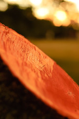 sliced (andymudrak) Tags: park wood sunset orange tree saw bokeh bark slice treestump woodgrain plantlife shortdepthoffield
