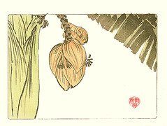 Japanese banana (Japanese Flower and Bird Art) Tags: flower art japan print japanese banana musa woodblock shibata maruyama shijo musaceae basjoo zeshin readercollection