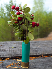 The Piece Hunting.  . (WisherMan) Tags: autumn green forest berries bokeh pineneedles cranberries bouquet woodtable   komi           huntingshell huntcartridge