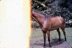 LMVP328092014011008 - Publicada Class V - Vu (Photos, Movies and Videos) Tags: horse cavalo vu