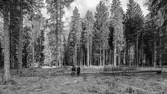 discontinuance (drugodragodiego) Tags: trees blackandwhite bw pentax kick lombardia biancoenero breno bosco k3 gaver bagolino radura vallecamonica vallesabbia provinciadibrescia smcpentaxda1224mmf4edalif pentaxda1224mm valledelcaffaro pentaxiani pentaxk3