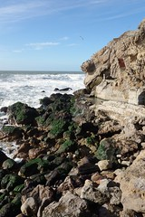 Point Lobos and ruins of Sutro Baths (vhines200) Tags: sanfrancisco surf seagull pacificocean landsend sutrobaths algae pointlobos 2015