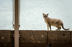 Pepe Gato (DingoShoes - life's a dream) Tags: cat beautiful spain peniscola seaside sea sunny wanderlust 2015 holiday travel travelphotography nikond7000 afsnikkor18105mm13556ged gato meow ilovecats miau