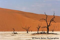 Dsert du Namib (tal78) Tags: flickraward5 coth coth5 ruby10