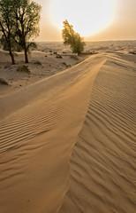 Sand dunes (Tiigra) Tags: dubai unitedarabemirates ae 2013 color landscape mountain nature plant shape tree pattern
