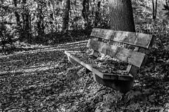 Wooden bench (josreimering1) Tags: herfst autumn bench woodenbench bankje houtenbankje blackandwhite zwartwit autumnleaves herfstbladeren