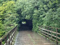 e keswick rail trail (Simon -n- Kathy) Tags: keswick england lakedistrict lakelands hike rain walk castlerigg