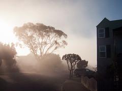 Between fog and sun (BECK17) Tags: goldengateheights neighborhood fog pointshoot morning sanfrancisco