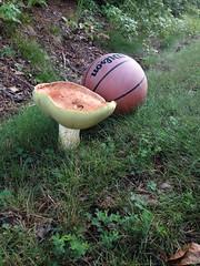 Mushroom (danmat28033) Tags: mushrooms lincolncounty lincoln county northcarolina