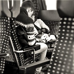 train_bw (liancozy) Tags: scenery travel landscape italiy train dog monochrome