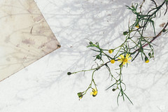 (lotl.axo) Tags: strasenrandfotografie flowers blumen