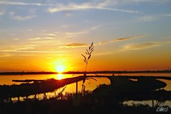 ___ solo! ... a gurdare il tramonto ___ (erman_53fotoclik) Tags: solo tramonto sunset cielo valli pianta profili neri acqua riflessi aloni colore luce atmosfera panasonik dmc fx10 erman53fotoclik vista scatto panorama natura crepuscolo calma