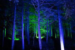 Colourful Forest (EricHarden) Tags: enchantedforest enchanted forest scotland light blue green show event pitlochry d7100 nikon nikkor 18200mm autumn dark night longexposure lightroom
