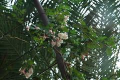 DSC03705 (oliveplum) Tags: gardensbythebay flowerdome olympusomsystemzuikomcautot12f85mm sony singapore bokeh nature marinabay