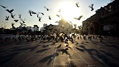 Fly Away to Freedom (Sanjiban2011) Tags: doha qatar souq souqwaqif pigeons shadow flyingbird flying freedom fanar fanaar outdoor nikon d750 fullframe nikon24120