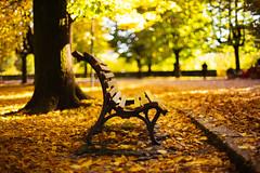 Time passes (Un ragazzo chiamato Bi) Tags: autumn autunno terni lapasseggiata giardini pubblici park panchina bench foglie foliage leaves leafs sony a7 zuiko om 50mm f12 dof bokeh