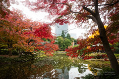 Far view, Iino Building (飯野ビルディング) (christinayan01) Tags: office building architecture perspective autumn park hibiya maple pond