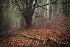 Rychory forest (camelos) Tags: krkonose czechrepublic forest fog moss canon5d rychorskyprales