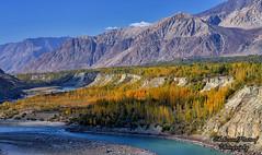Autumn in Gilgit (Shehzaad Maroof Khan) Tags: gilgit autumn gilgitbaltistan river mountains pakistan nature karakoram