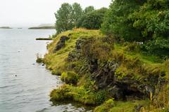 Hfi (kzoop) Tags: iceland travel vacation europe lake myvatn nature hofdi tree trees forest woods hike hiking