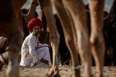 Untitled (Shameem Shah) Tags: culture travel street shutterarts lifestyle camel india pushkar turban rajasthan villager