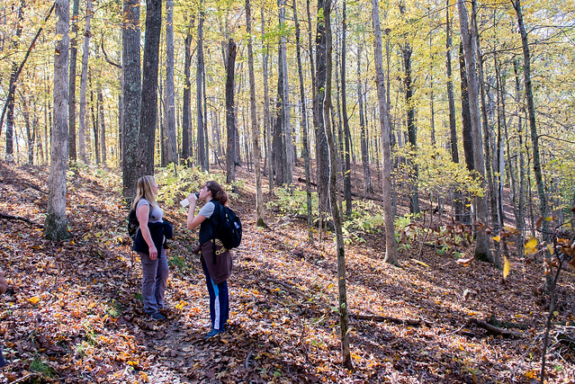 Hoosier National Forest - Pate Hollow - Sierra Club Hike - October 29, 2016