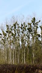 DSC_7650be (Katinka Irrlicht) Tags: forest wald trees baum bume autum herbst nikon 50 mm nikkor d750