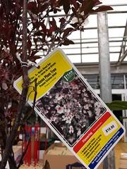 20160321_144905 (pbinder) Tags: 2016 201603 20160321 march mar monday mon kansas city missouri kansascity kansascitymissouri kc mo kcmo lowes plants plum tags